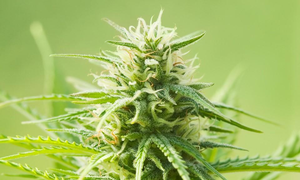 Consecuencias del consumo de Cannabis (THC)